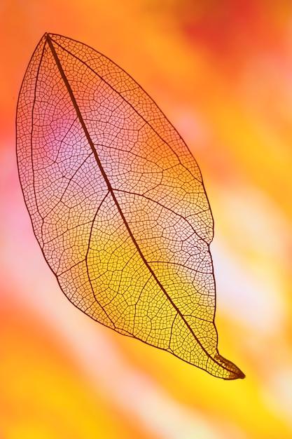 Осенний лист с желтым и оранжевым Бесплатные Фотографии