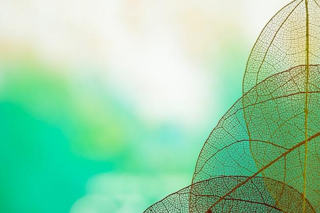 Абстрактные прозрачные зеленые листья Бесплатные Фотографии