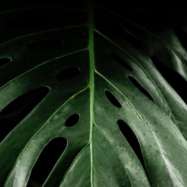 Крупным планом зеленый тропический лист Бесплатные Фотографии