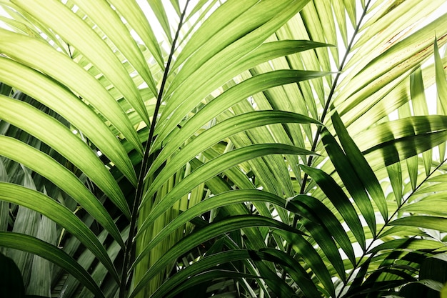 緑の熱帯植物と葉 無料写真
