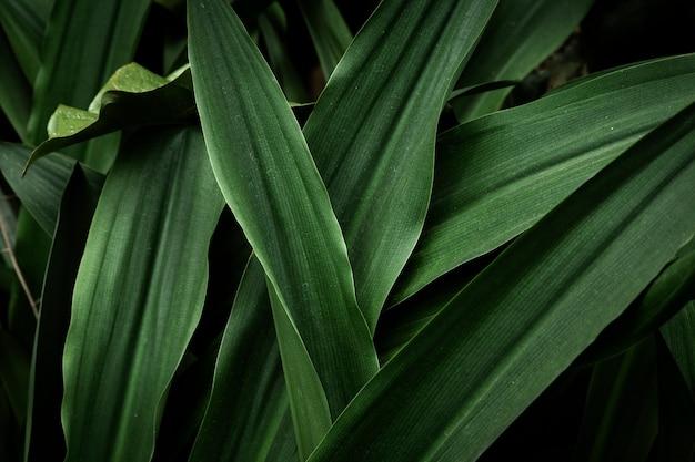 トップビュー緑の熱帯の葉 無料写真
