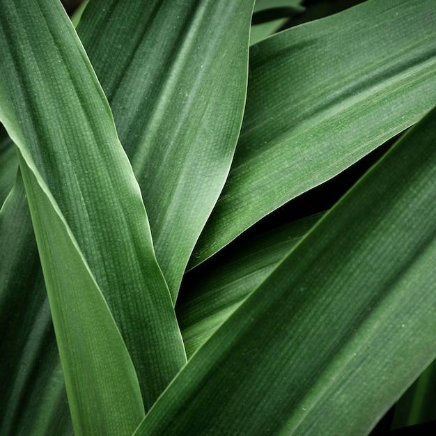 美しい熱帯の葉のクローズアップ 無料写真
