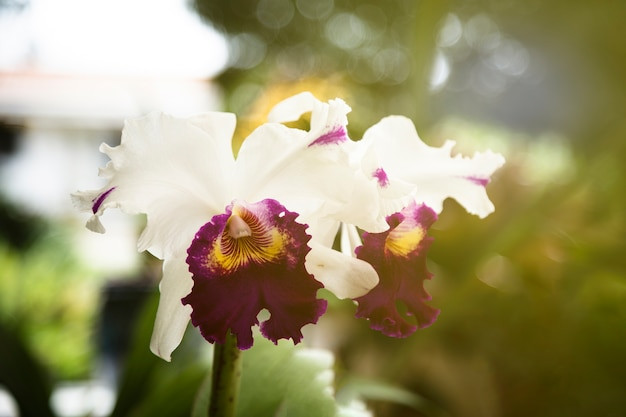 Красивый цветок расцветает на солнце Бесплатные Фотографии
