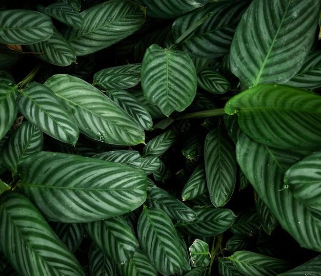 Вид сверху тропических листьев Бесплатные Фотографии