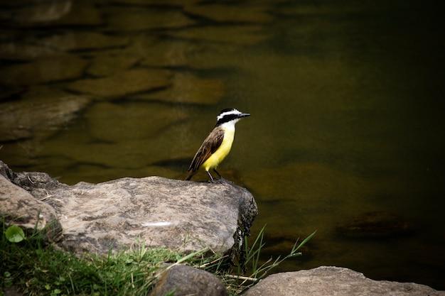 Красивая птица возле реки крупным планом Бесплатные Фотографии