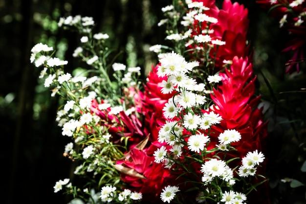 背景をぼかした写真とエキゾチックな花 無料写真