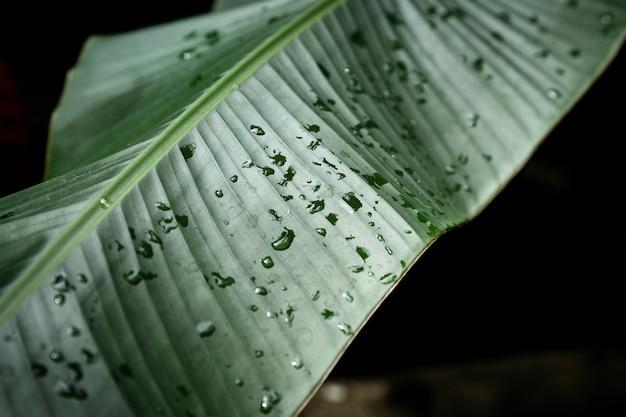 Крупным планом тропических листьев с капельками росы Бесплатные Фотографии