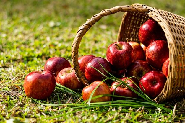 わらのバスケットの正面の赤いリンゴ 無料写真