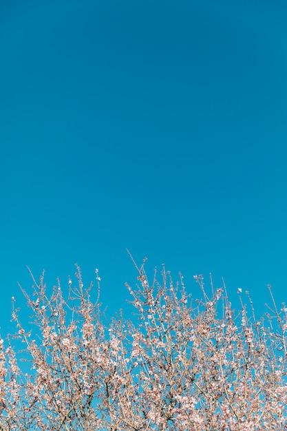 咲く木とコピースペースと澄んだ空 無料写真