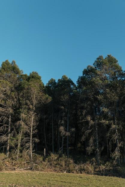 目の高さは晴れた空で背の高い木を撮影しました 無料写真