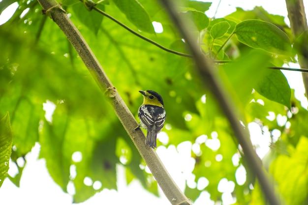 熱帯雨林の木の枝に腰掛けて鳴鳥の背面図 無料写真