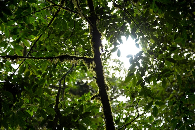 コスタリカの熱帯雨林の苔と木の枝の低角度のビュー 無料写真