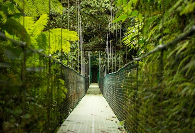 Висячий подвесной мост в тропическом лесу Бесплатные Фотографии