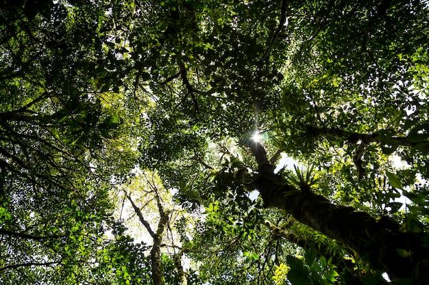 Солнечный свет проходит через ветку дерева в лесу Бесплатные Фотографии