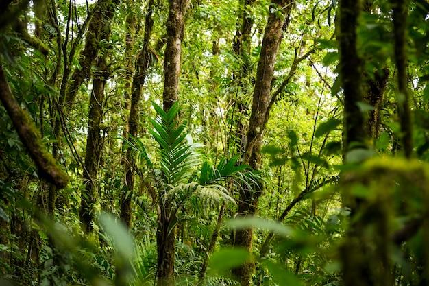 コスタリカの密な熱帯雨林 無料写真