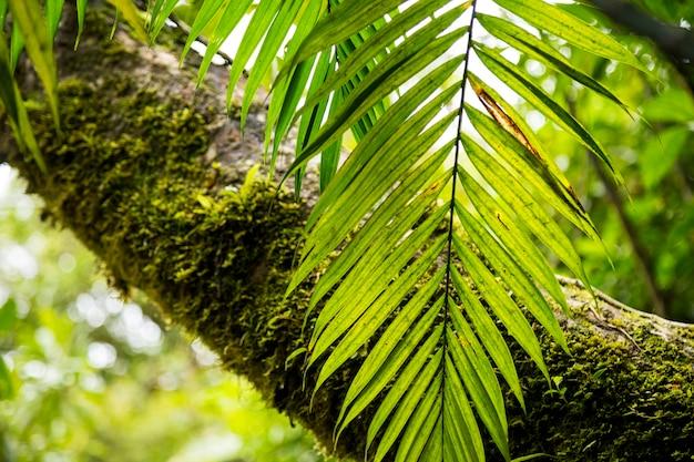 熱帯雨林の木の幹にコケします。 無料写真