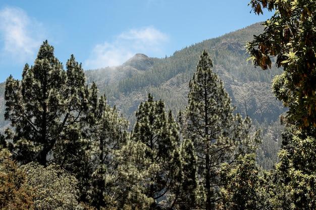 背景に山と針葉樹林 無料写真
