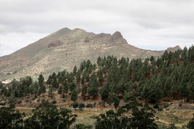 曇りの背景を持つ樹木が茂った山の斜面 無料写真