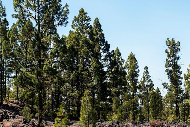 澄んだ空と緑の森 無料写真