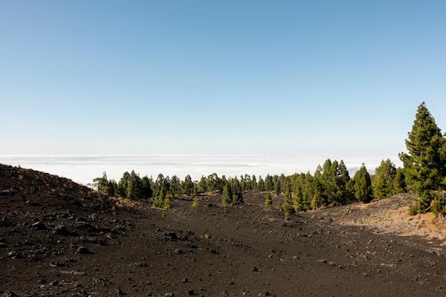 雲の上の美しい森 無料写真