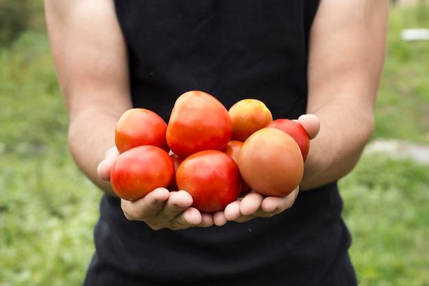両手新鮮なトマトの収穫フロントの眺め 無料写真