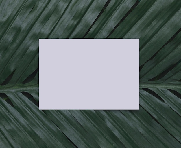Белая бумага на тропическом листе копией пространства Бесплатные Фотографии