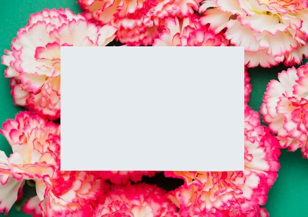 Розовые цветы гвоздики с копией пространства Бесплатные Фотографии