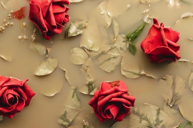 茶色の水に赤いバラ 無料写真