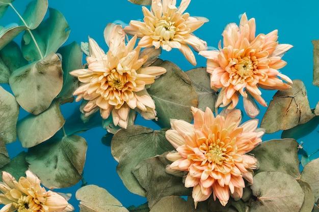 青い色の水の中の淡い菊 無料写真