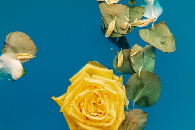 Квартира лежала желтая роза и листья в воде с копией пространства Бесплатные Фотографии