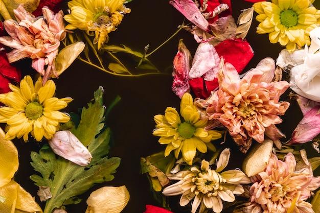 水にフラットレイアウトマルチカラーの花 無料写真