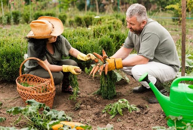 ニンジンを収穫する年配のカップル 無料写真