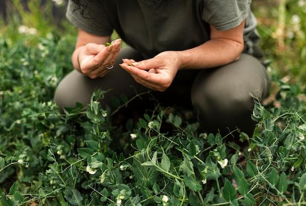 植物を気遣うクローズアップ女性 無料写真