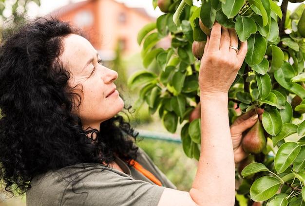Женщина крупного плана собирая груши Бесплатные Фотографии