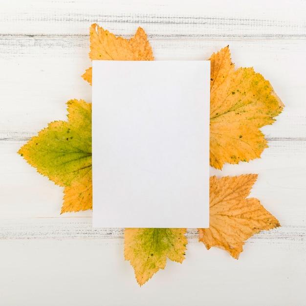 Чистый лист бумаги сверху на листьях с макетом Бесплатные Фотографии