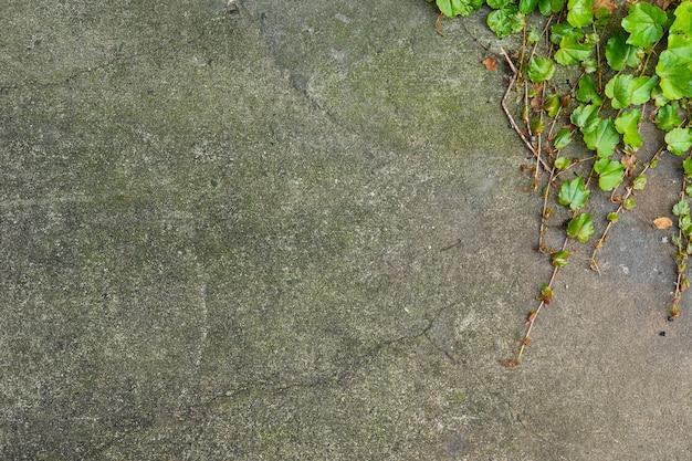 高齢者の石の壁の背景 無料写真