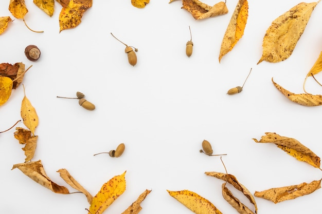 黄色の葉とドングリのトップビューの配置 無料写真