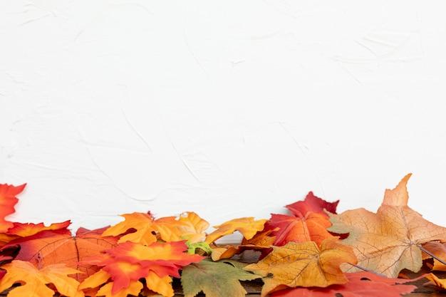 白い背景と色の葉 無料写真