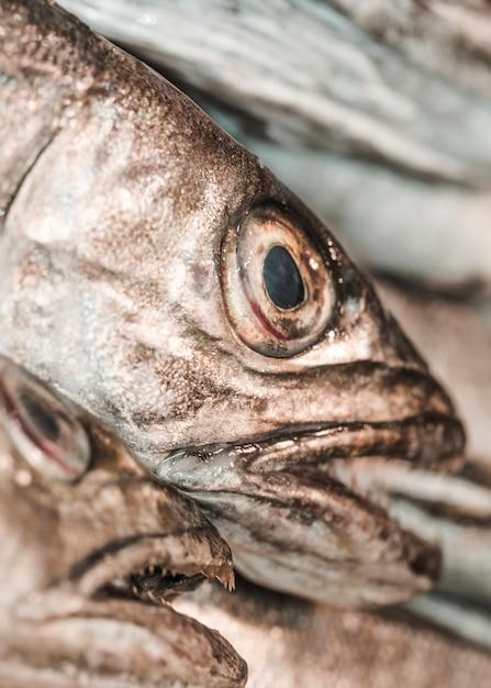 ショップで新鮮な魚のクローズアップ 無料写真