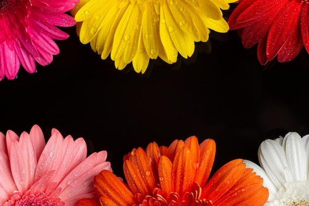 黒い背景にガーベラデイジーの花の半分 無料写真