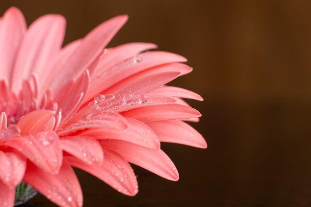 ピンクのガーベラデイジーの花の半分をクローズアップ 無料写真