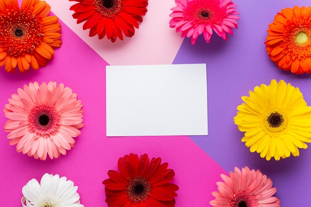 ガーベラのヒナギクに囲まれた白い空のカード 無料写真