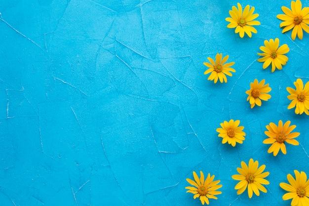 青の背景にスペインのカキアザミの花のフレーム 無料写真