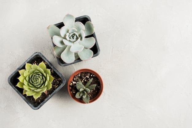 コピースペースを持つ植物の平面図 無料写真