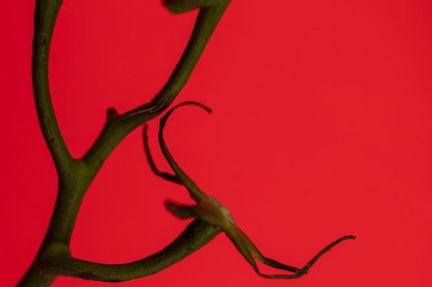赤の背景にトマトの枝 無料写真