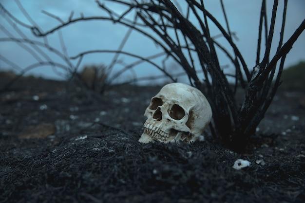 Реалистичный вид сбоку череп с ветвями, глядя в сторону Бесплатные Фотографии