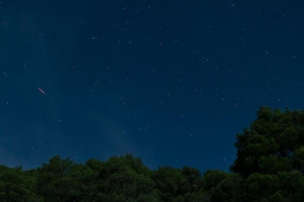 青い夜空と森 無料写真