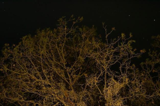 暗い夜空と背の高い木 無料写真