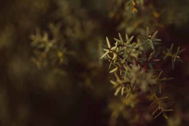 背景をぼかした写真の常緑針葉樹 無料写真
