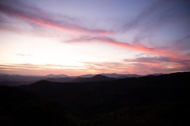 美しい森の風景 無料写真